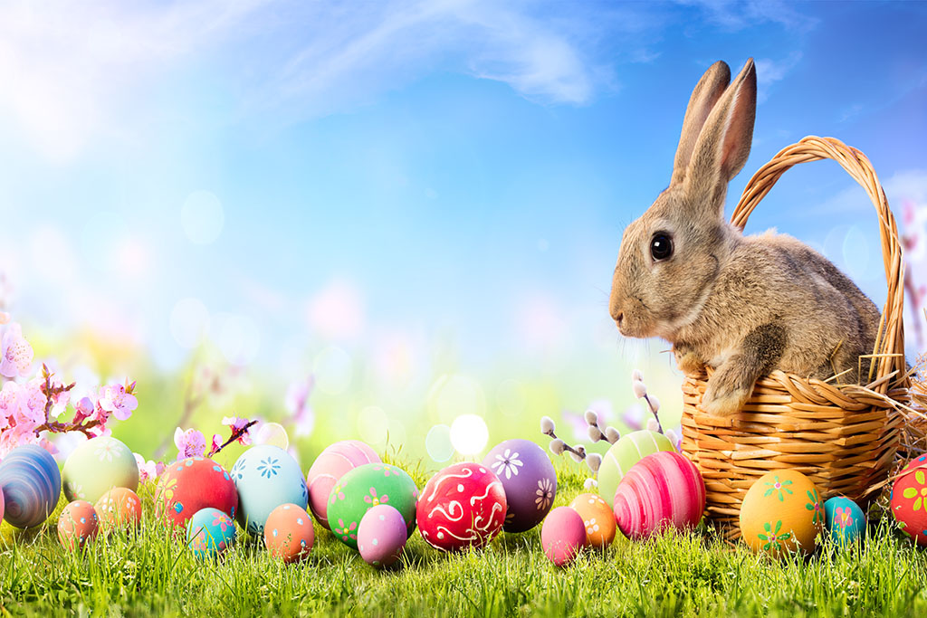 easter bunny with eggs on field