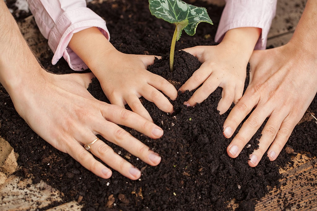 adult and child planting seed