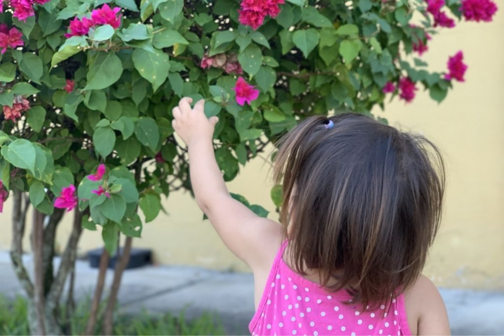 A young girl picking flowers in Honduras